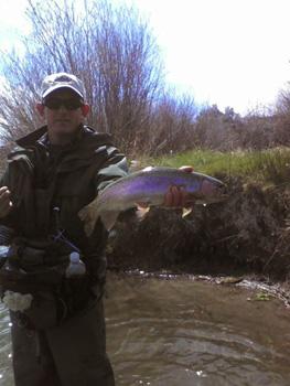 Ken's Rainbow Trout